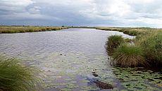 Gewässer mit grünem Uferbereich und wolkigem Himmel