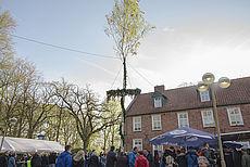 Bild eines Maibaums